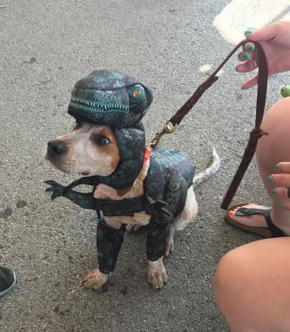 Coonhound puppy costume